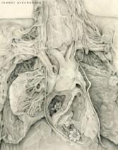 Autopsia.La otra anatomia