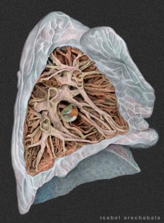 Arbusto bronquial.La otra anatomia