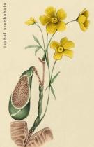 flores de vesícula.La otra anatomia