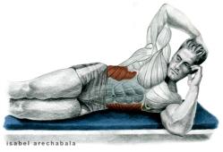 Pila Teleña. Enciclopedia de los ejercicios de Musculación