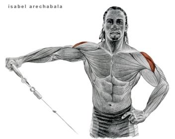 Enciclopedia de los ejercicios de musculación. Pila Teleña