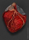 Corazón.......